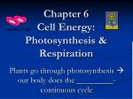 Chapter 6 Cell Energy: Photosynthesis & Respiration