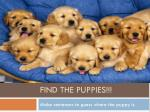 Find the puppies!!!