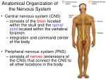 Anatomical Organization of the Nervous System