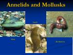 Annelids and Mollusks
