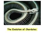The Evolution of Chordates