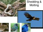 Shedding & Molting