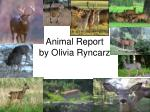 Animal Report by Olivia Ryncarz