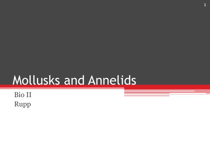 mollusks and annelids n.