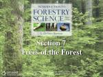 Section 7 Trees of the Forest