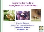 Exploring the world of honeybees and bumblebees