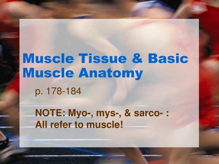 muscle tissue basic muscle anatomy n.