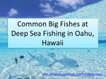 Common Big Fishes at Deep Sea Fishing in Oahu, Hawaii