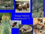 Energy/Nutrient Relations (Ch. 7)