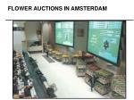 FLOWER AUCTIONS IN AMSTERDAM