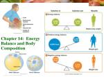 Chapter 14:  Energy Balance and Body Composition