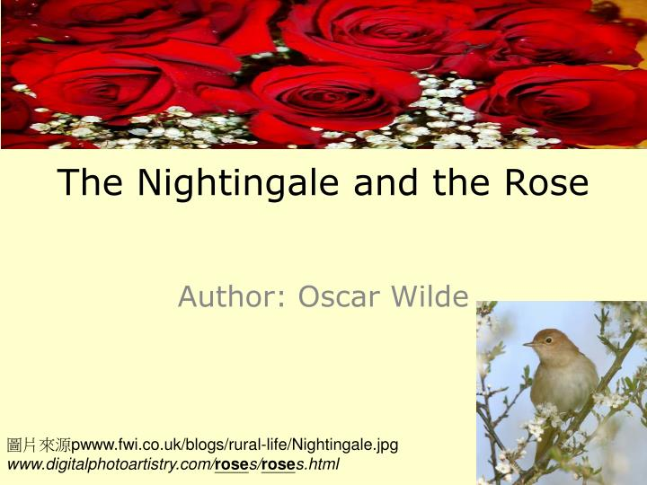 the nightingale and the rose n.