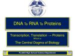 DNA  To  RNA  To  Proteins