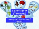 Classification (Taxonomy)
