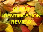 PLANT  IDENTIFICATION  REVIEW