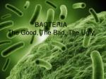 BACTERIA The Good, The Bad, The Ugly