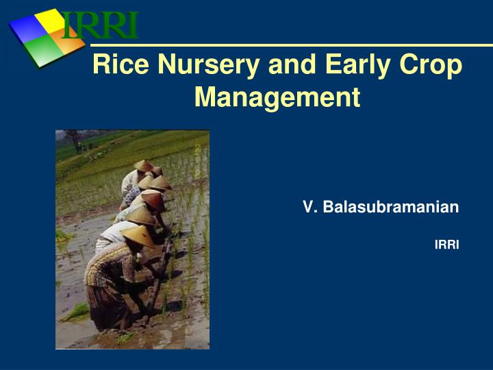 rice nursery and early crop management n.