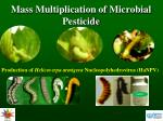 Mass Multiplication of Microbial Pesticide