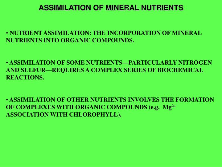 assimilation of mineral nutrients n.