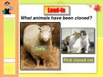 What animals have been cloned?