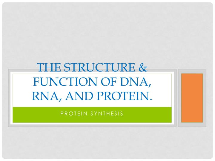 the structure function of dna rna and protein n.