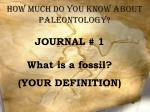 How much do you know about Paleontology?