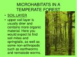 MICROHABITATS IN A TEMPERATE FOREST