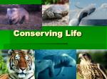 Conserving Life