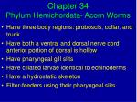 Chapter 34 Phylum Hemichordata- Acorn Worms