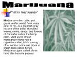 What is marijuana?