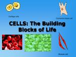CELLS: The Building Blocks of Life