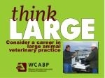 Consider a career in large animal veterinary practice