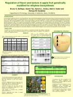 Regulation of flavor and texture in apple fruit genetically modified for ethylene biosynthesis