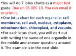 cell lotus chart project