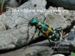 Ch 28-4 – Insects and Their Relatives