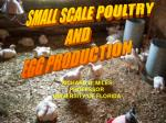 SMALL SCALE POULTRY AND EGG PRODUCTION