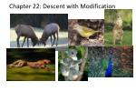 Chapter 22: Descent with Modification