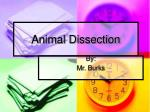 Animal Dissection