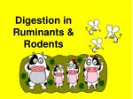 Digestion in Ruminants & Rodents