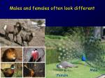 Males and females often look different