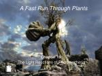 Chapter 19: The Light Reactions of Photosynthesis