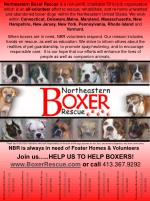 Join us…..HELP US TO HELP BOXERS!   BoxerRescue  or call  413.367.9292