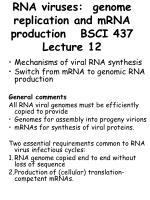 RNA viruses: genome replication and mRNA production BSCI 437 Lecture 12