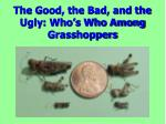 The Good, the Bad, and the Ugly: Who's Who Among Grasshoppers