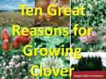 Ten Great Reasons for Growing Clover