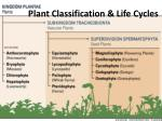 Plant Classification & Life Cycles