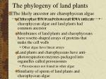 The phylogeny of land plants