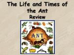 The Life and Times of the Ant Review