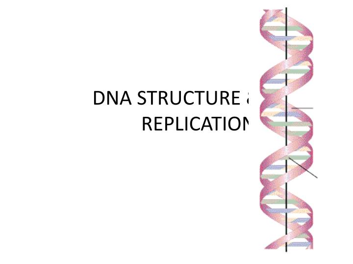dna structure replication n.