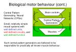 Biological motor behaviour (cont.)